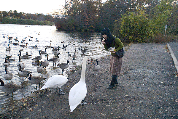 k and swans